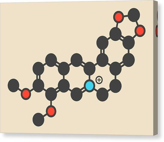 Diabetes Canvas Print - Berberine Alkaloid Molecule by Molekuul