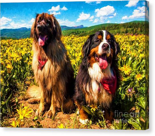 Bernese Mountain Dogs Canvas Print - Bernese Mountain Dog And Leonberger Among Wildflowers by Gary Whitton