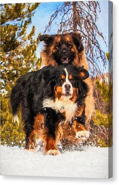 Bernese Mountain Dog And Leonberger Winter Fun Canvas Print