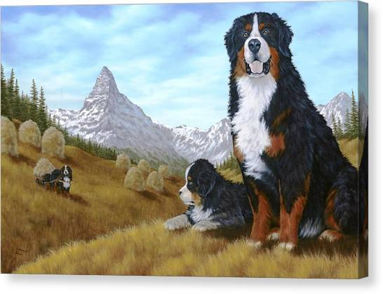Bernese Mountain Dogs Canvas Print - Bernese Mountain Dog by Rick Bainbridge