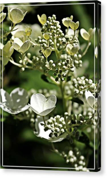 Berries And Blooms In Monochromatic Green Canvas Print