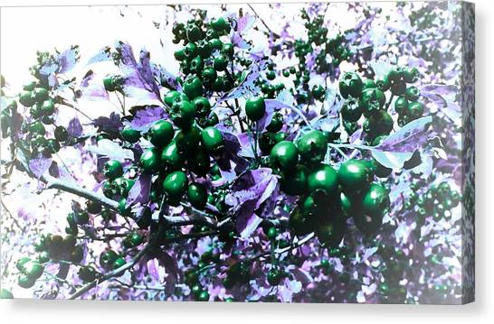 Wild Berries Canvas Print - Berries Green Edit by Candy Floss Happy
