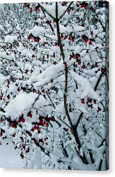 Berries In Snow Canvas Print by Nickaleen Neff