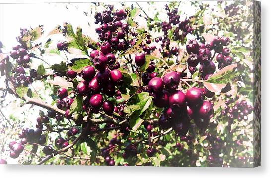 Red Wine Canvas Print - Berries Wine Edit by Candy Floss Happy