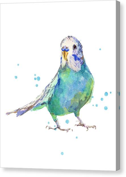 Parakeets Canvas Print - Bertie Wonderblue The Budgie by Alison Fennell