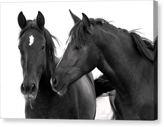 Best Buds Wild Mustang Canvas Print