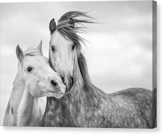 White Horse Canvas Print - Best Friends I by Tim Booth