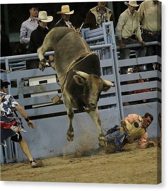 Rodeos Canvas Print - #bestoftheday #bullrider #bull #cowboy by Lisa Yow