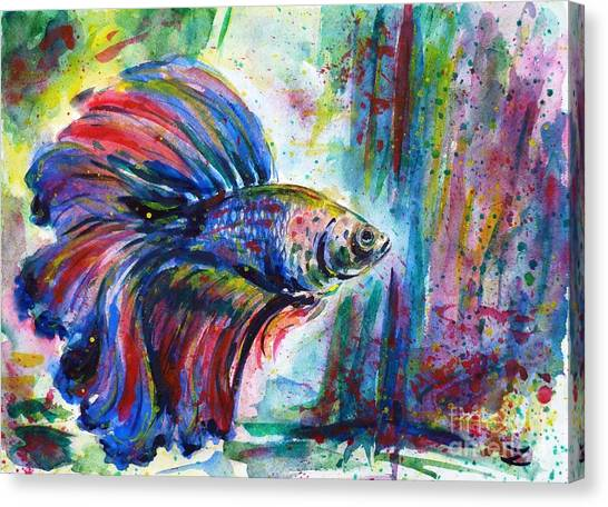 Betta Canvas Print