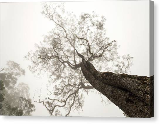 Tree Trunks Canvas Print - Between Heaven And Earth by Karsten Wrobel