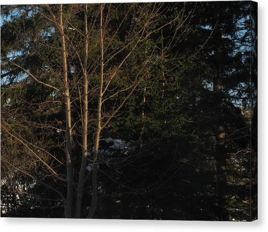 Adam Smith Canvas Print - Between The Trees by Adam Smith