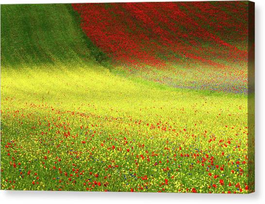Blossom Canvas Print - Beyond Dreams by Russo Francesco