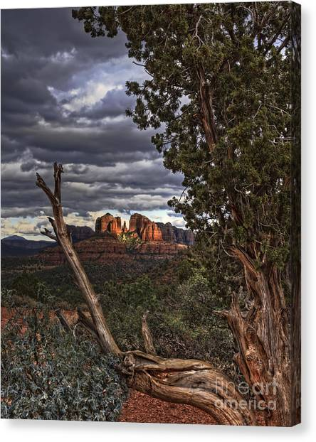 Verde Canvas Print - Beyond The Shaggy Bark Juniper by Medicine Tree Studios