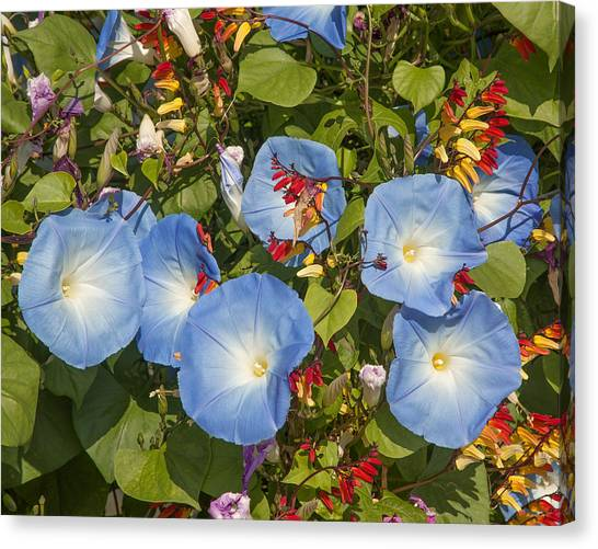 Bhubing Palace Gardens Morning Glory Dthcm0433 Canvas Print