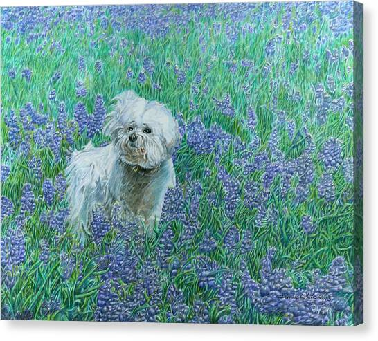 Canvas Print featuring the drawing Bichon In The Bluebonnets by Dominic White