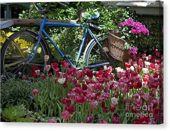Bicycle In My Garden Canvas Print
