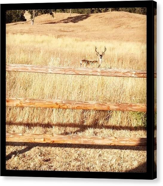 Hunting Canvas Print - Big Ass Buck #huasna by Todd Bright