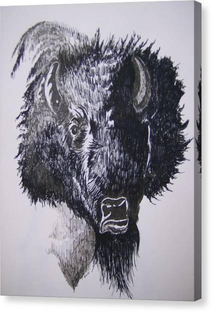 Big Bad Buffalo Canvas Print