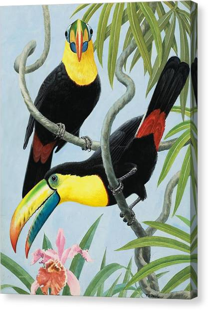 Toucan Canvas Print - Big-beaked Birds by RB Davis