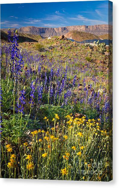 Big West Canvas Print - Big Bend Flowers by Inge Johnsson