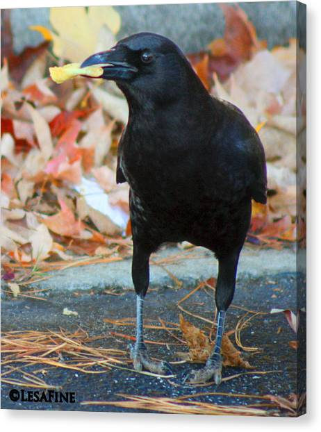 Big Daddy Crow Leaf Picker Canvas Print