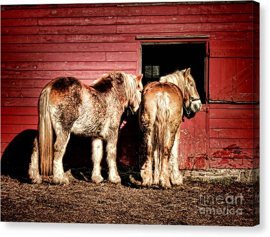 Draft Horses Canvas Print - Big Horses by Olivier Le Queinec