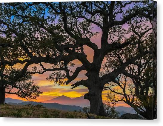 Big Oak Canvas Print