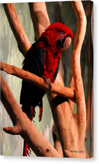 Big Red Canvas Print by Dick Botkin