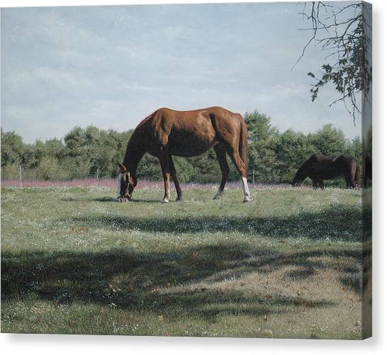 Horse Farms Canvas Print - Big Red by Julia O'Malley-Keyes