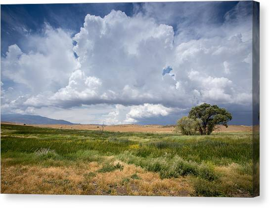 Big Sky Canvas Print - Big Sky And Tree by Peter Tellone