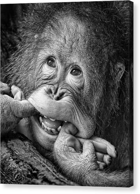 Primates Canvas Print - Big Smile.....please by Angela Muliani Hartojo