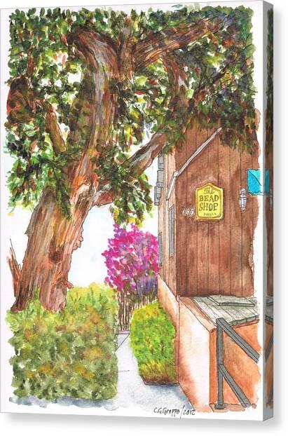 Big Tree At The Bead Shop, Laguna Beach, California Canvas Print
