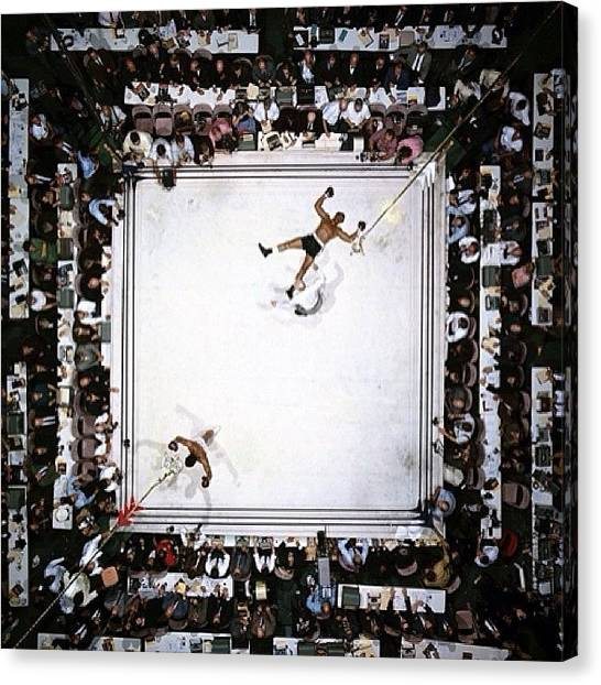 Knockout Canvas Print - #bigcat #clevelandwilliams #neilleifer by Will Haight
