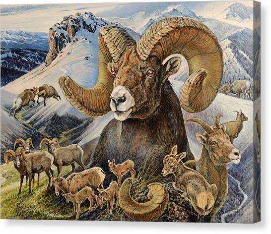 Bighorn Lifescape Canvas Print