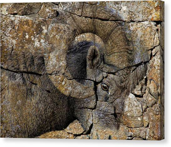 Canvas Print - Bighorn Rock Art by Steve McKinzie
