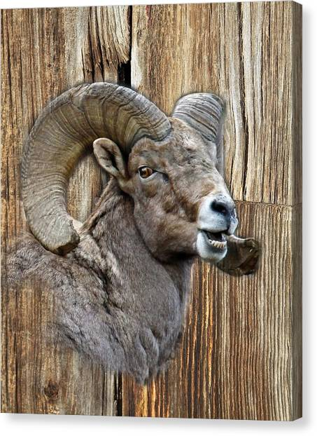 Bighorn Sheep Barnwood Canvas Print
