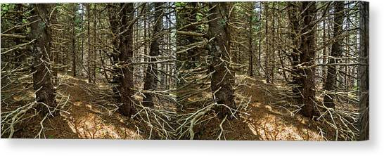 Cabot Trail Canvas Print - Billions Of Branches by Matt Molloy