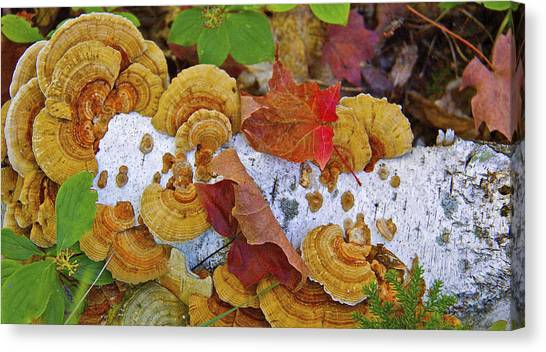 Birch And Fungi Canvas Print