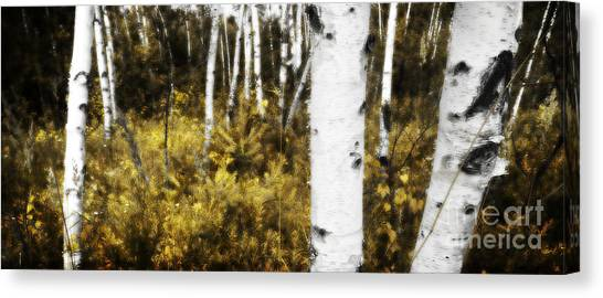 Birch Forest I Canvas Print