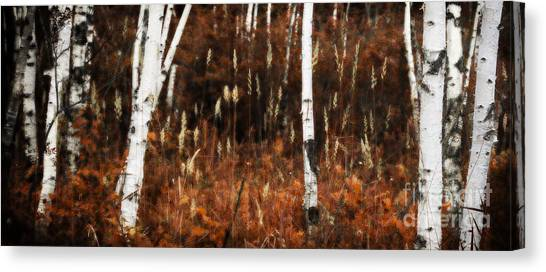 Birch Forest II Canvas Print