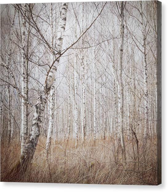 Birch Canvas Print - Birch Forest by Renate Wasinger