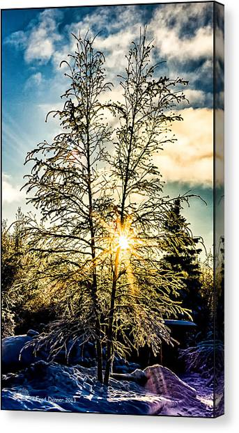 Birch Frost Canvas Print