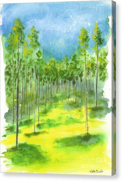 Birch Glen Canvas Print