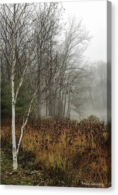 Birch In Winter Canvas Print