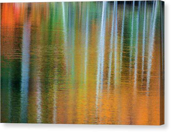 Marquette University Canvas Print - Birch Trees Artistically Reflect by Chuck Haney