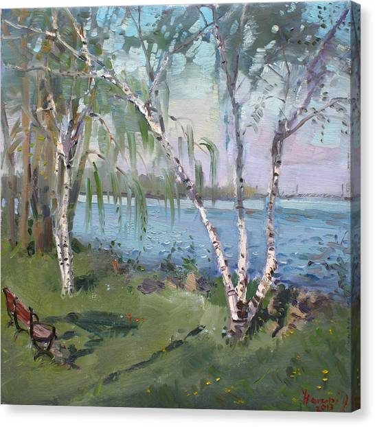Benches Canvas Print - Birch Trees By The River by Ylli Haruni