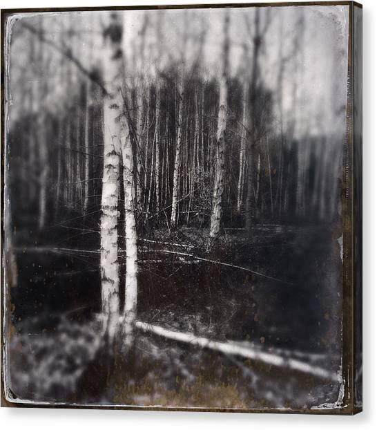 Forests Canvas Print - Birch Trees In Enchanted Forest by Matthias Hauser