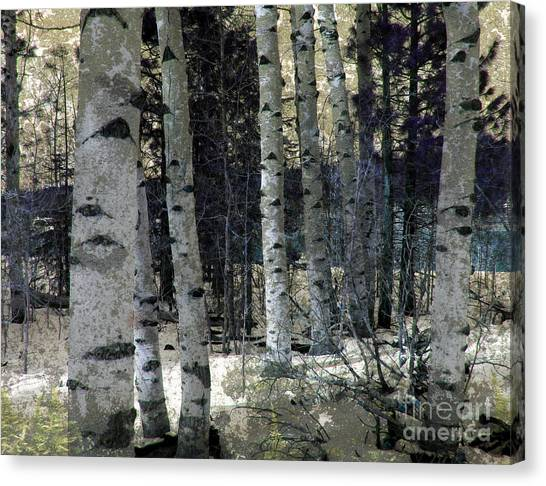 Birch Trees In Snow  Canvas Print