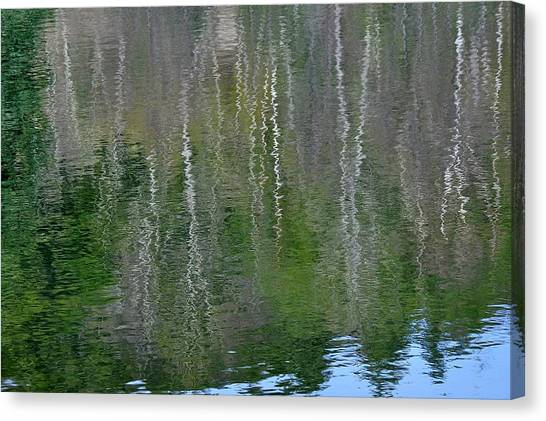 Birch Trees Reflected In Pond Canvas Print
