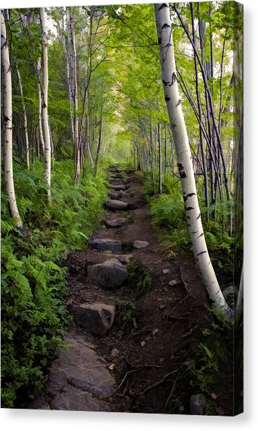 Birch Woods Hike Canvas Print